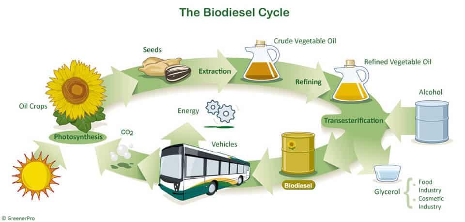 Biodiesel Cycle