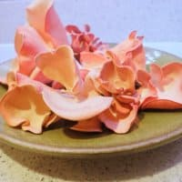 A Harvest of Edible Pink Oyster Mushrooms (Pleurotus Djamor)